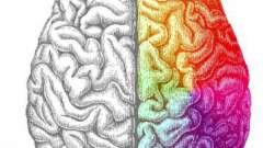 Ліва півкуля мозку відповідає за що? Як розвинути ліва півкуля мозку?
