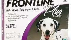 Кращі краплі від кліщів для собак: рекомендації і поради