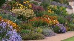 Багаторічні квіти невибагливі для саду (фото)