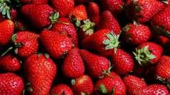 Чи можна пересаджувати полуницю в жовтні і який догляд їй необхідний?