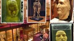 Музей медичної історії мюттера, пенсільванія: історія, експонати, фото