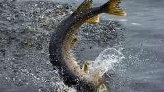 На риболовлю на озеро щучье