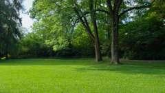 Низькорослі газонні трави. Насіння газонних трав, ціна. Газонна трава, яка знищує бур`яни