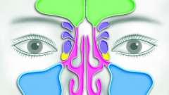 Ніс: додаткові пазухи носа. Кт придаткових пазух носа