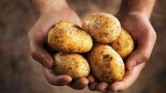 Про те, в якій країні вперше почали вирощувати картоплю
