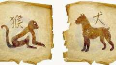 Мавпа і собака: сумісність за східним гороскопом