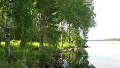 Озеро гусяче, приозерськ район - відмінне місце для відпочинку