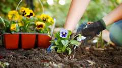 Посадка квітів на садовій ділянці