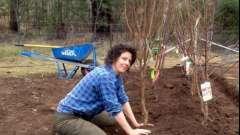 Посадка плодових дерев на дачній ділянці