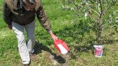 Правильна підживлення дерев і чагарників навесні