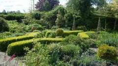 Пряні трави на дачі - життєва необхідність
