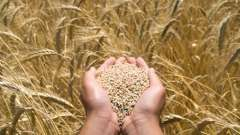 Протруйники насіння: всі про препарат і його дії
