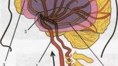 Рег судин головного мозку. Переваги методу діагностики