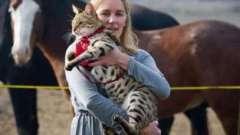 Найбільший кіт у світі: унікуми і породи