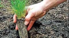 Зробимо сад красивим. Газонна трава: посадка і догляд