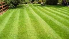 Зробимо садову ділянку красивим - посадка газону