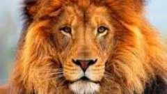 Скорпіони і леви: сумісність в коханні, дружбі, кар`єрі