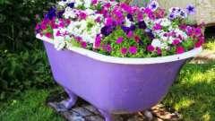 Поради садівникові: коли садити петунію
