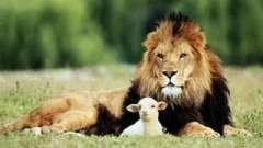 Сумісність левів і баранів. Характеристика союзу