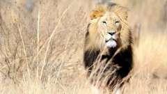 Сумісність чоловіка-лева і жінки-ваг в житті і творчості