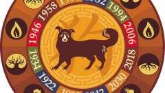 Сумісність змії і собаки в китайському гороскопі