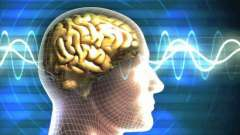 Середній мозок: функції і будова. Функції середнього мозку і мозочка