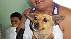Стерилізація собак