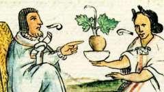 «Травник. Лікарські рослини і їх застосування »- цікава книга для любителів натуральних ліків