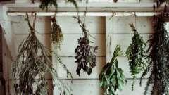 Трави для схуднення, що спалюють жир: відгуки, рецепти