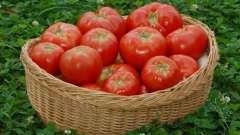 Добриво для помідор: які бувають і як проводять їх підгодівлю