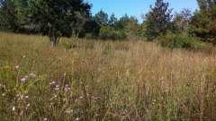 Верхній шар грунту, густо заросла трав`янистих рослини, - основа родючості