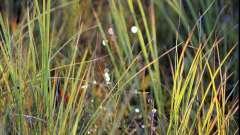 Водне або болотне трав`яниста рослина: назви і опису