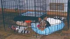 Вольєр в квартиру для собаки. Утримання собак в домашніх условиях