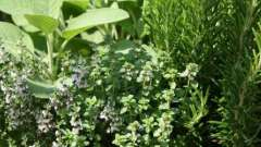 Вибираємо трав`яний збір для схуднення і очищення організму