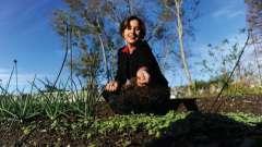Навіщо потрібна газонна трава? Як садити правильно газони?